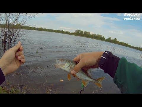 весеннее лов щуки на живца видео