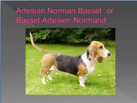 0 dog breed names cross reference part 1   A