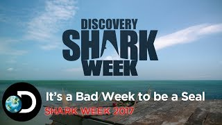 It's A Bad Week To Be A Seal | Shark Week 2017