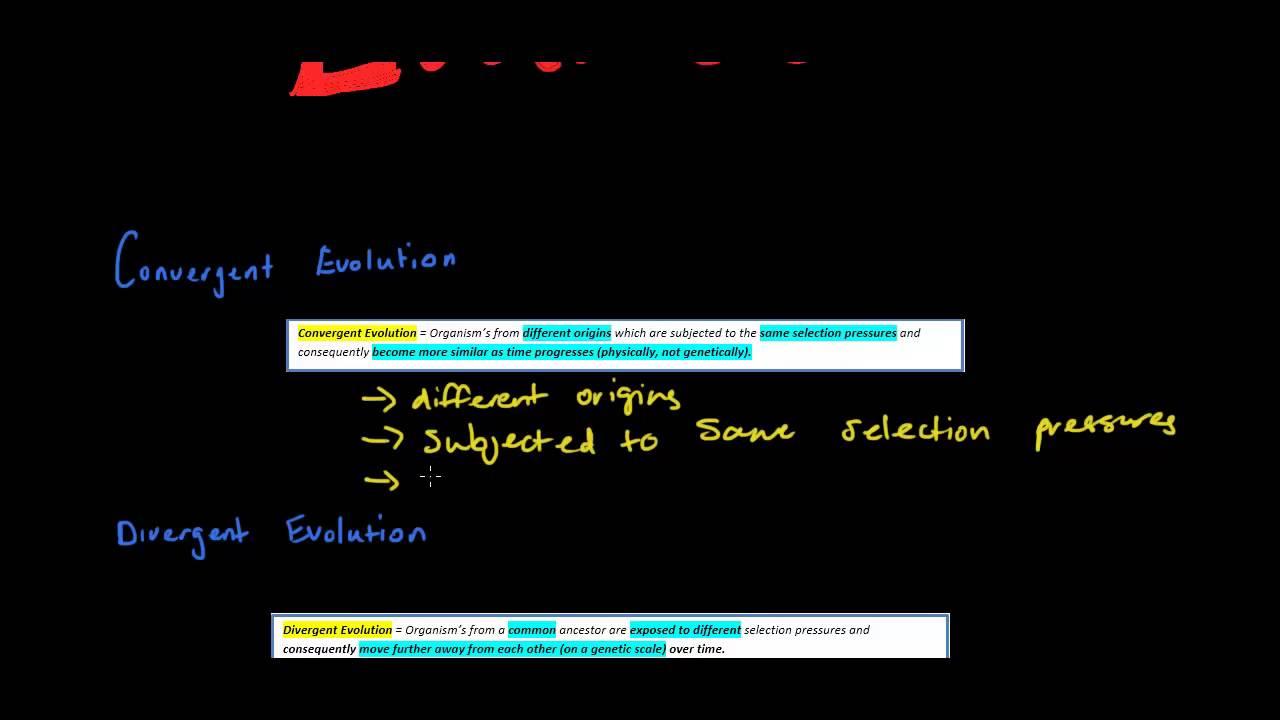 Convergent Evolution vs Divergent Convergent And Divergent