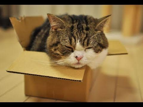 Thumb Maru and His Small Box