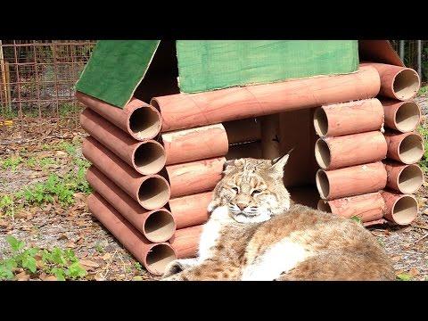 Big cat conservation careers