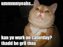 Funny LOL Cats! You might pee your pants 2