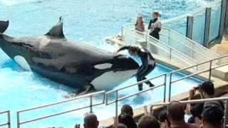 Dünyanın en büyük balinası