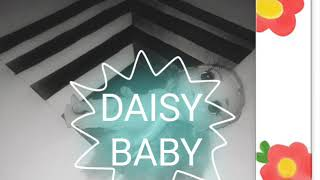 "Daisy Baby ""ROLL IN PEACE"" Music"
