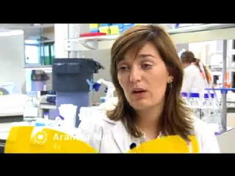 Peces Cebra en Investigación Alimentaria