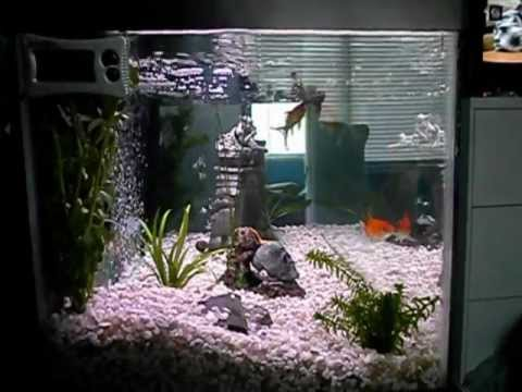 How to treat ick ich how to save money and do it yourself for Ick in fish tank