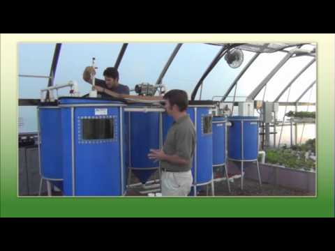 Sam's Aquaponic Tips   Grow In Harmony With Aquaponics
