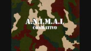 Watch Animal Combativo video