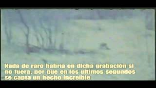 El impactante video de gable HD