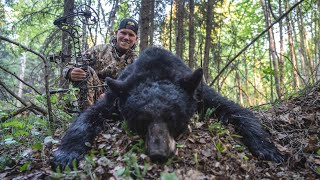 Bowhunting GIANT Black Bears in Canada