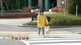 兵庫盲導犬協会