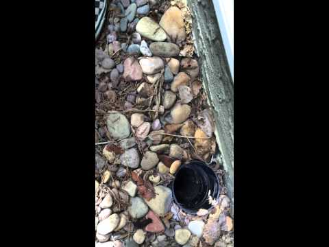 深い排水溝の底にに落ちてしまったアヒルのヒナの救出劇!!