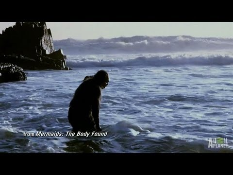 Uncovering the Aquatic Ape Theory | Mermaids
