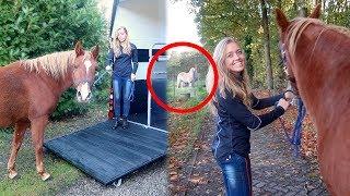 Mijn pony Noura verhuizen naar... + uitleg waarom | Vlog #127