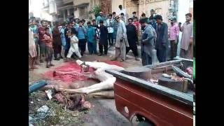 Download Dangerous Camel Sacrifice on Eid Al Adha 2016 Muslims Event 3Gp Mp4