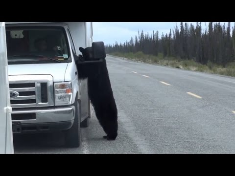 2011 Yukon und Alaska mit dem Wohnmobil - Teil 3 (
