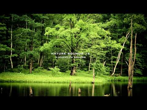 Nature Sound 16 - THE MOST RELAXING SOUNDS - Music Videos