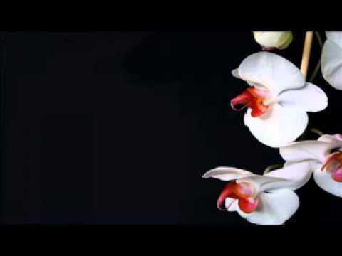 Ofra Haza - Love Song (Wild Orchid Kintar Remix)