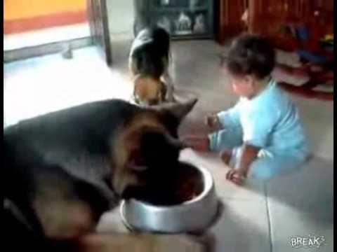 Bebeğin Mamasını Yiyen Köpek