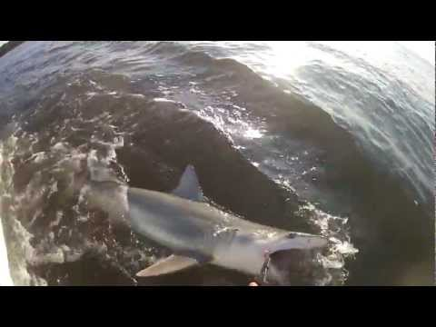 Shark Fishing Hilton Head Island