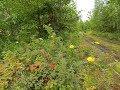 Прогулка в Лес за грибами..