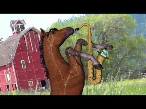 You're Correct Horse