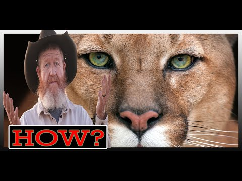 Hound Dogging Trials, Tribulations and Frustrations