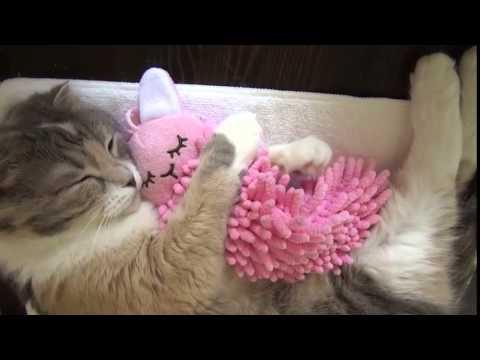 Kat Knuffelt Met Knuffel. Dit Is Het Liefste Dat Je Vandaag Gaat Zien!