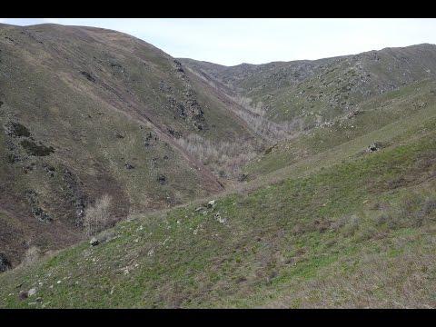 Охота на медведя в Восточно-Казахстанской области (Зыряновский  район)