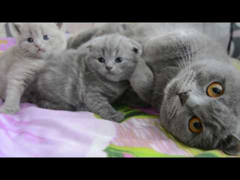 Дневник котят #2   День 18 - Котята бесятся!