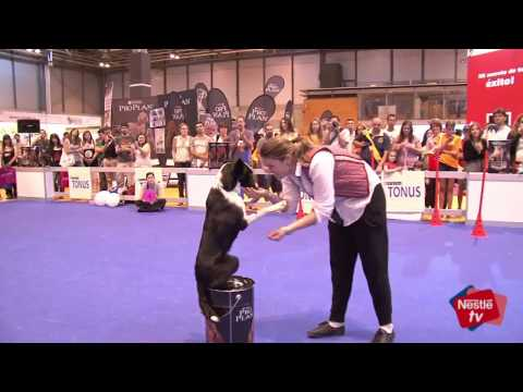 Deporte para perros (agility, dog dancing, disc dog)