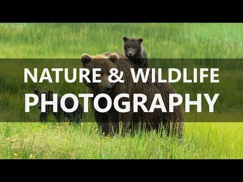 TheFIX 051: Nature & Wildlife Photography with Lewis Kemper