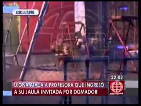 Cusco  grabaron terrible ataque de león a profesora en circo  15 DE AGOSTO DEL 2014