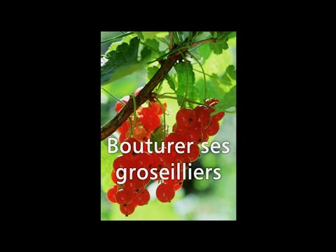 les 4 saisons du jardin bio bouturer ses groseilliers youtube. Black Bedroom Furniture Sets. Home Design Ideas