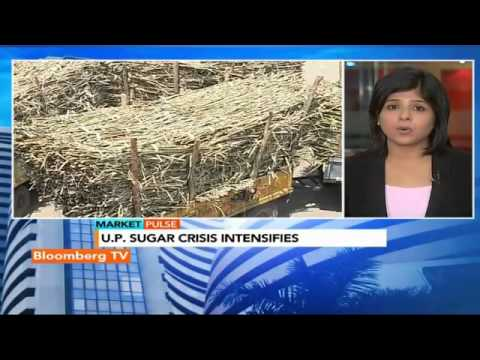 Market Pulse: Sugar Crisis: Mills Begin Layoffs