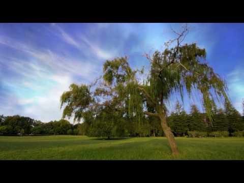 Philip Larkin - The Trees