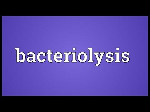 Header of bacteriolysis