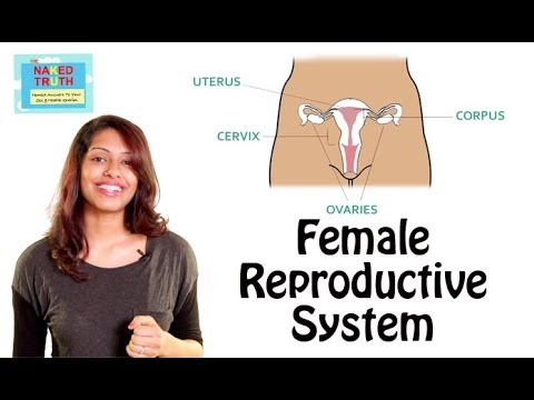 Female Reproductive System 101 In Hindi video