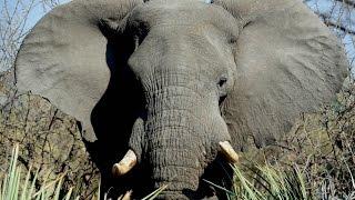 FUNNY ELEPHANT ATTACK