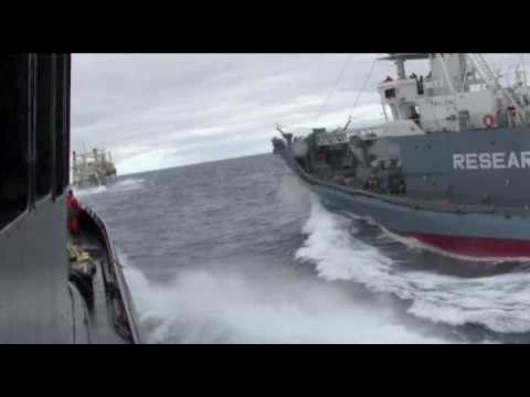 Sea Shepherd Ship Bob Barker rammed by the Japanese harpoon ship Yushin Maru 3