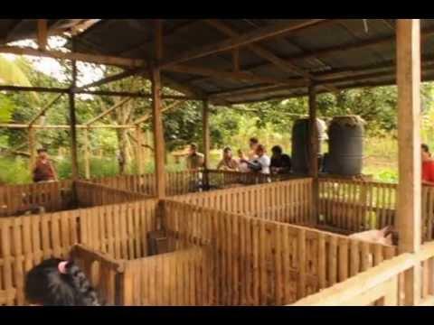 Natural Farming Visit To Balik Bukid Calinan Davao City