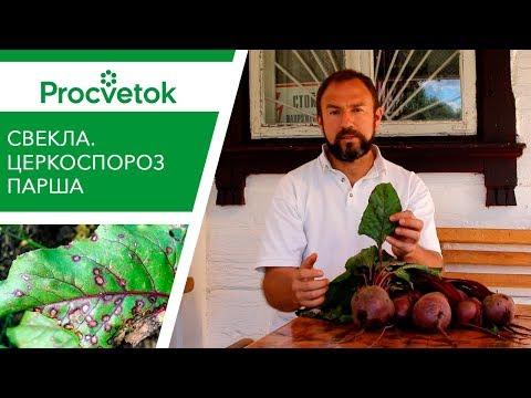 Болезни овощей в открытом грунте – симптомы, фото и меры борьбы, справочник-памятка
