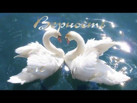 Любовь и верность. Красивое видео. Лебединая верность