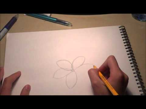 Frangipani Flower Drawing Frangipani Flower