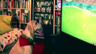 Even animals love world cup soccer.