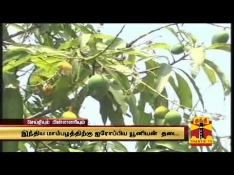 European Union bans Indian Alphonso mangoes - Seithiyum Pinnaniyum