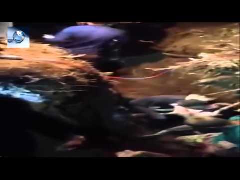 Rescatan a perro atrapado 3 días bajo tierra