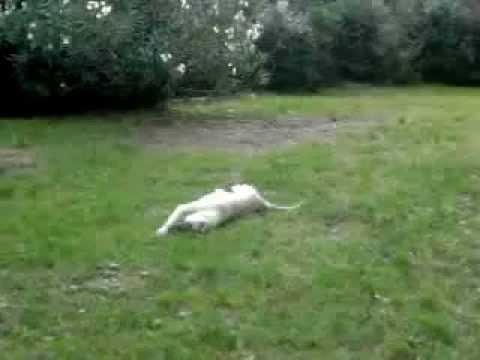 Animali divertenti – Il mio cane gioca con il sasso.mp4