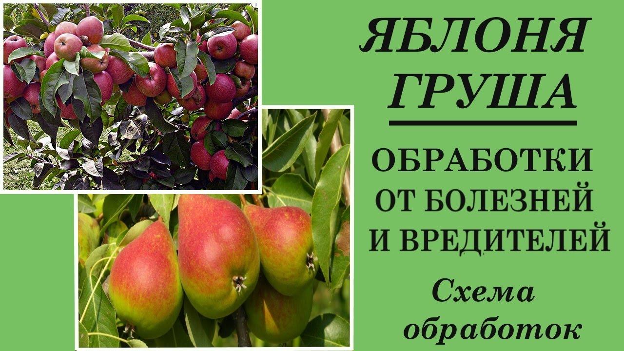 Уход за яблоней болезни и вредители с